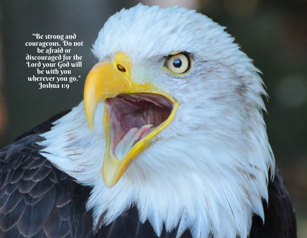 Soar #6: Eagles are Bold, Courageous and Powerful