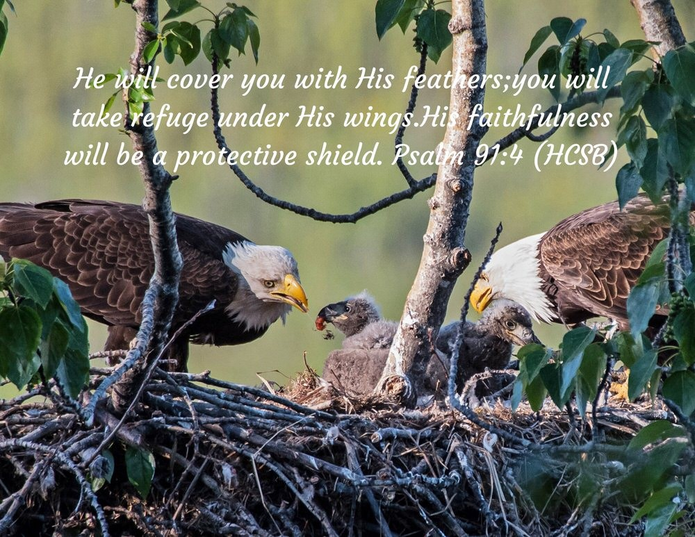 Soar #8: Eagles are Faithful for Life